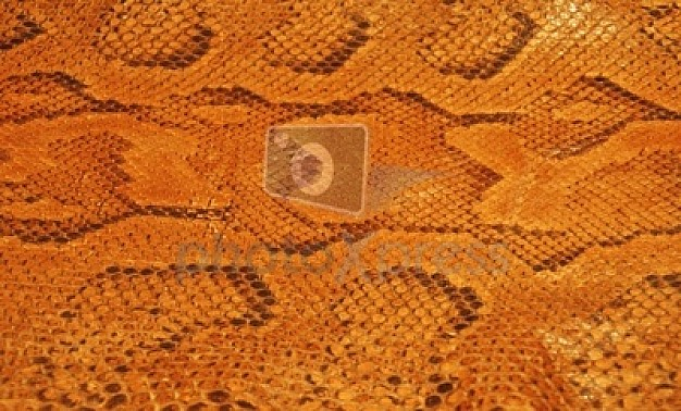 Leather pattern with snake shell macro brown fashion