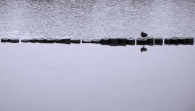 lonely duck swimming over lake in grey landscape