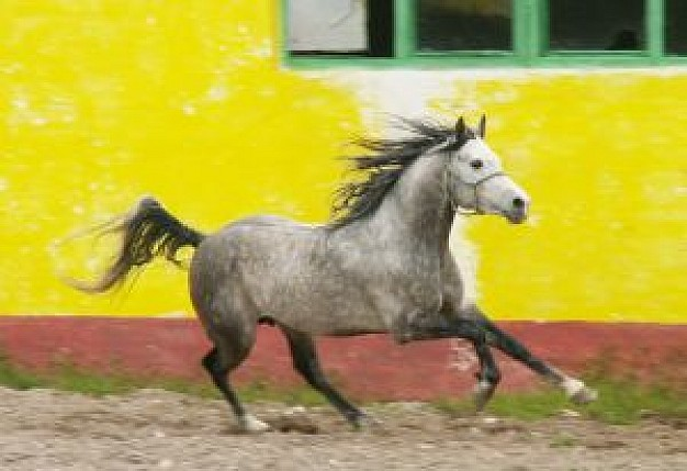 magic horse running with yellow wall and green window at back