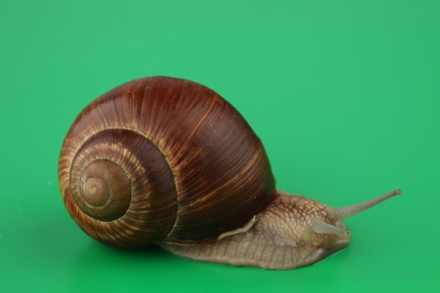 mollusk animals eye shells about snail crawling over green surface