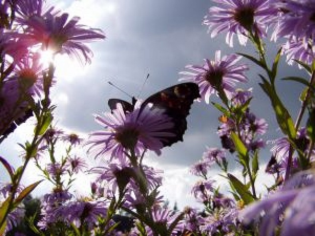 nature life that butterfly stopping on flowers with sunlight sky background
