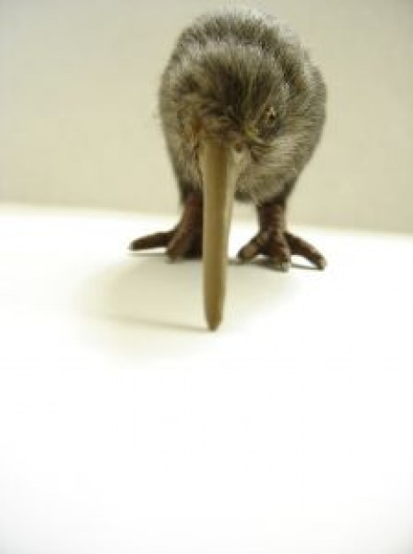 New Zealand kiwi photo art about Department of Conservation
