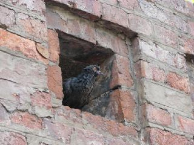 pigeon animal stopping in small brick window