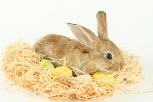rabbit lying on the wood shavings and holidays eggs