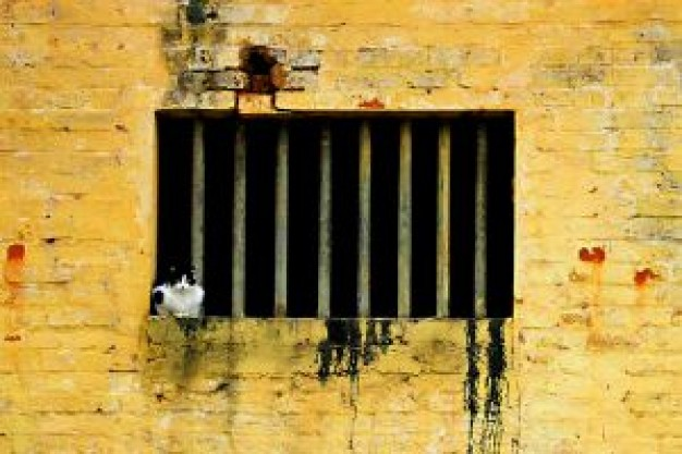 Recreation cat in jail with window about Adoption Irish whiskey