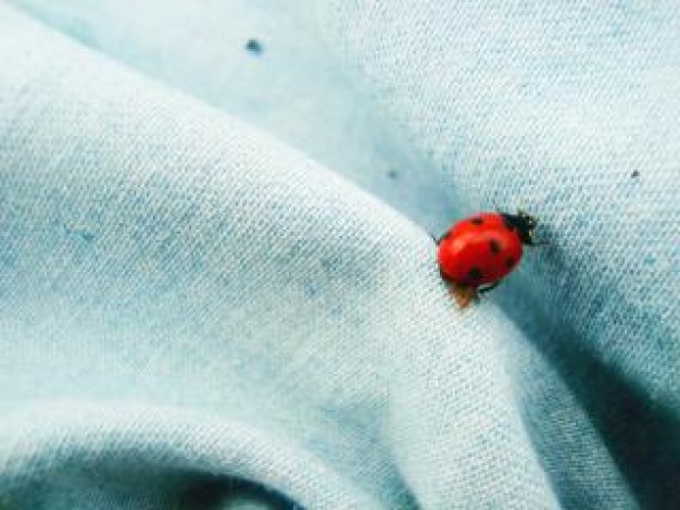 red and black dot ladybird bug crawling on dress