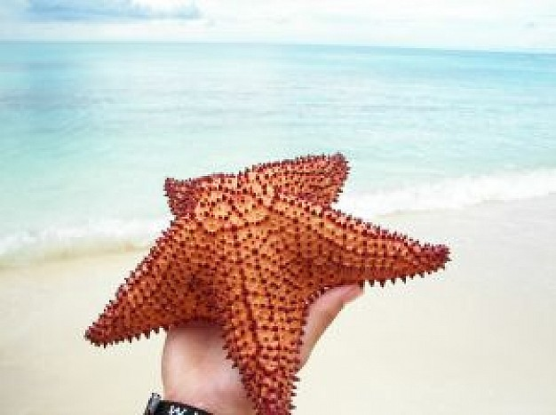 sea star in hand with sea and beach background