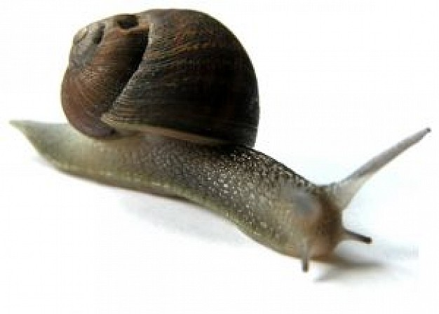 snail crawling over white surface