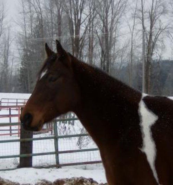 snow beautiful Sports horse about Year of the Horse Equestrian