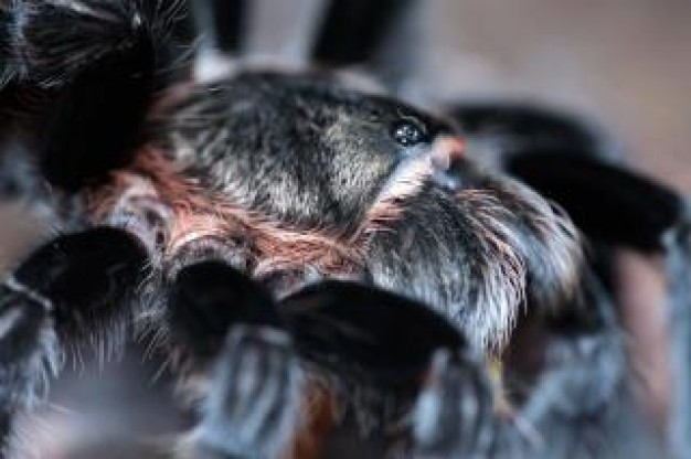 spider wildlife close-up with black feet