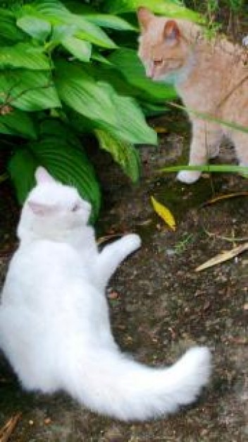 standoff cats fight  with green leaf at back