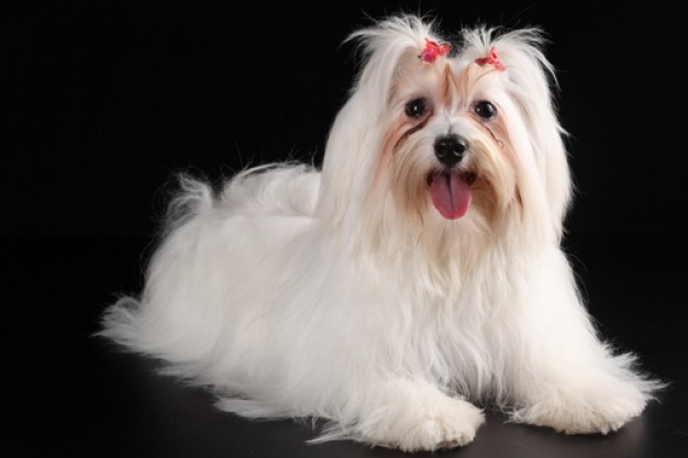 stylish pets dog feature with black background