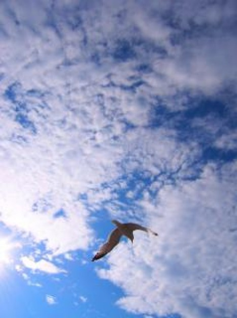 the bird flying over cloudy blue sky