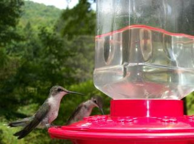thirsty birds stopping on red water dispenser