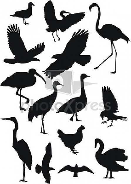 variety of black painting animal like crane