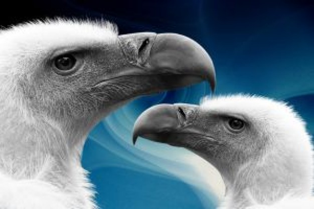 vulture heads close-up facial over sea background