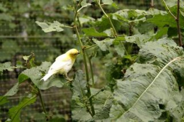 white Bird and yellow bird about cage plant with green leaf