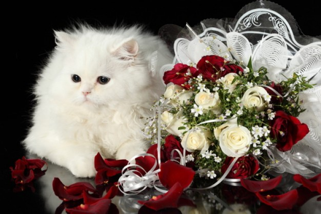 white cat with petals flower wedding tenderness on side
