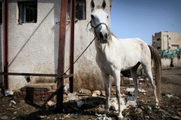 white horse kept by trash