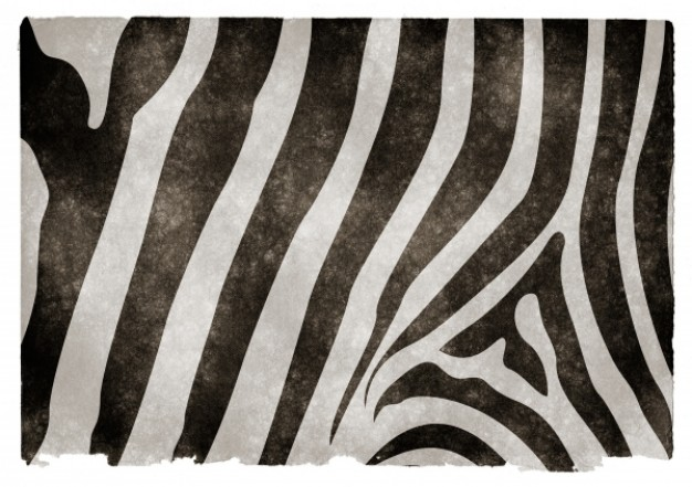 zebra shell pattern for striped grunge texture
