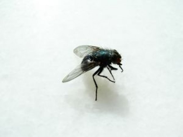 blue fly staying on the surface