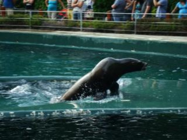 sea lion showing on water surface