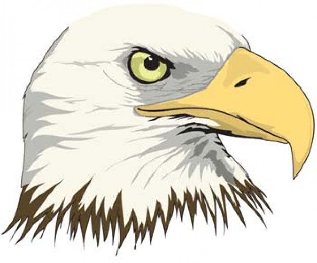 eagle of vivacious eye and yellow mouth with White background