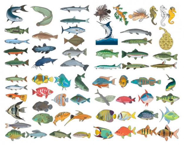a variety of fish material like shark