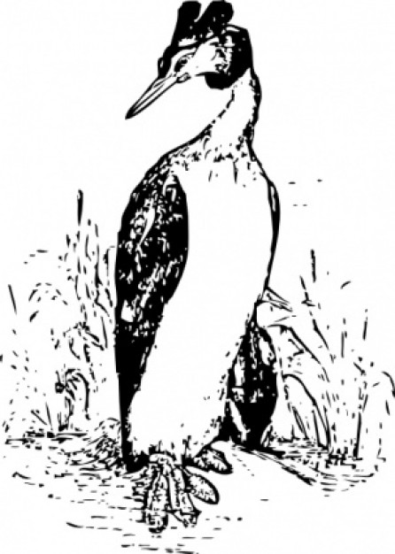the grebe walking at grass clip art in front view