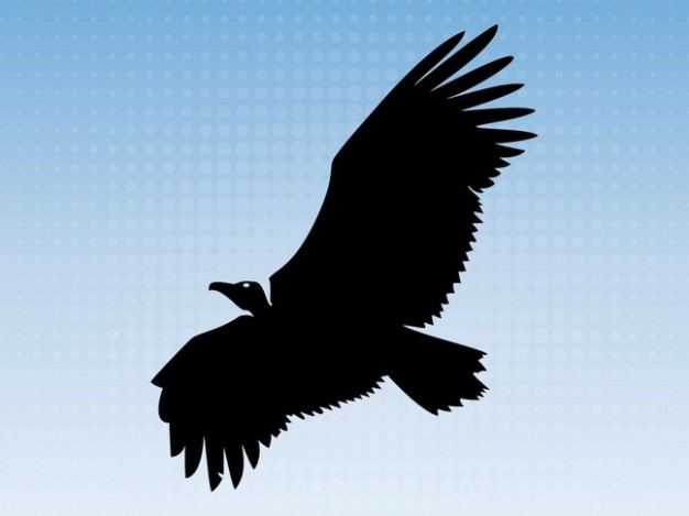 Big eagle flying in blue sky animal silhouette
