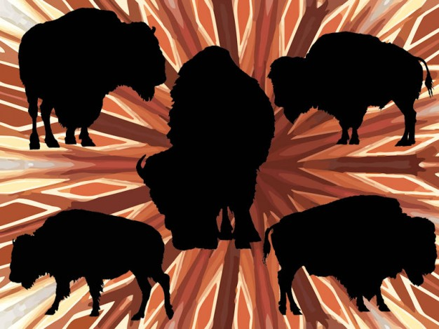 american wild buffalo vector pack with emanative lines at back
