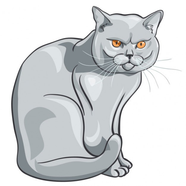 Animal material gray Cats clipart with orange eyes light