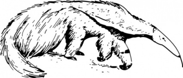 anteater hunting the food in hand draw style