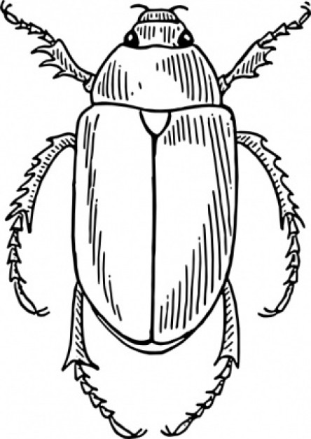 beetle top view clip art with white background