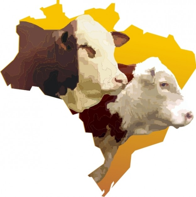 brazil map white bulls heads over yellow background