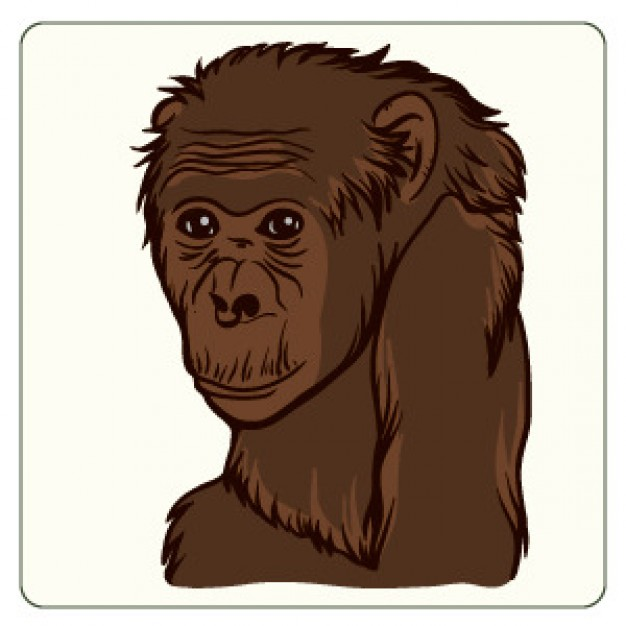 brown Monkey portrait freehand drawing vector