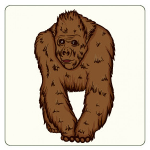 brown orangutan front view freehand drawing vector