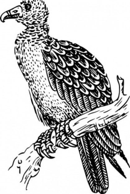 buzzard standing on branch clip art with White background