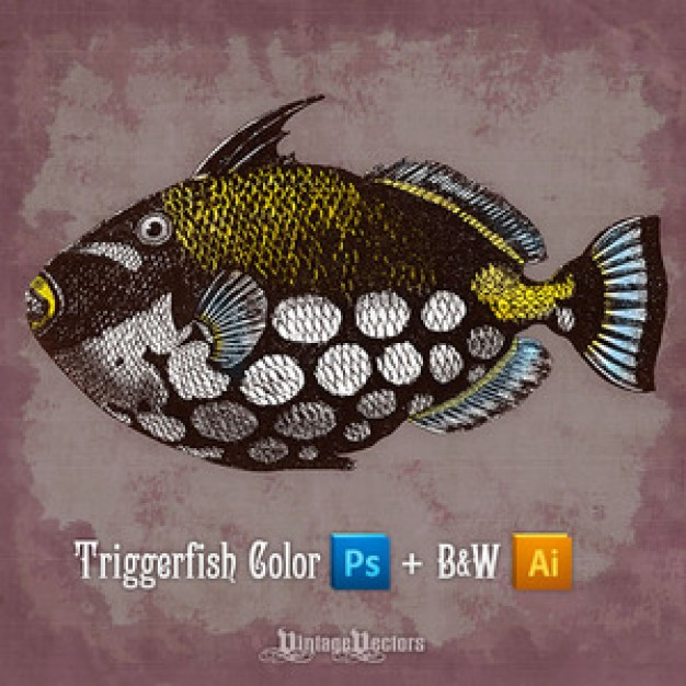 Clown Triggerfish swimming over vintage background