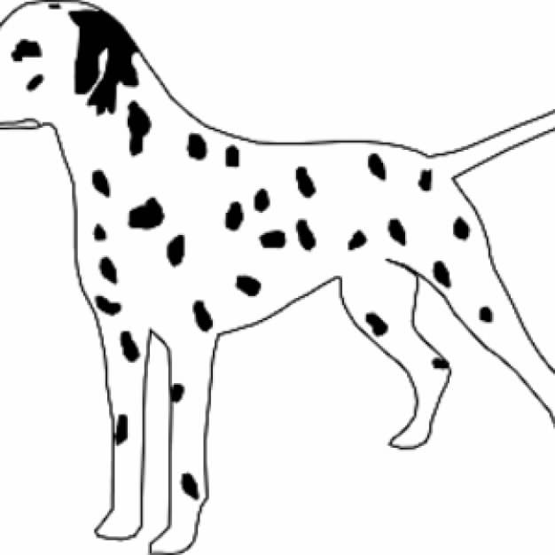 Dalmatian Dog with black spots in side view