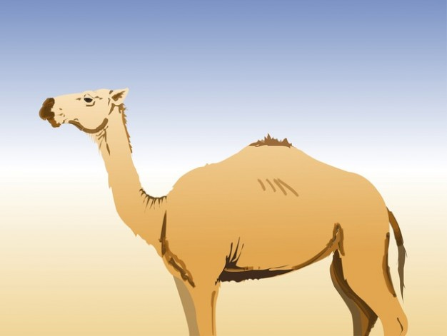 Desert animal Camel side view with desert and sky background vector illustration