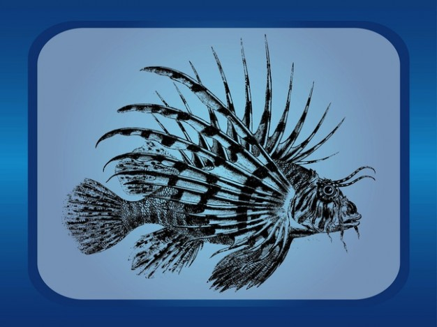 Exotic fish of aquatic animal in frame vector