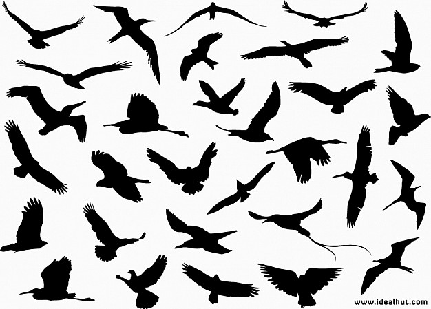 flying birds silhouette for decorate your art