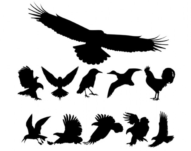 fowls silhouettes like eagle cock dove crow