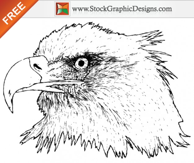 Free Eagle head Vector Graphics Drawn by Hand