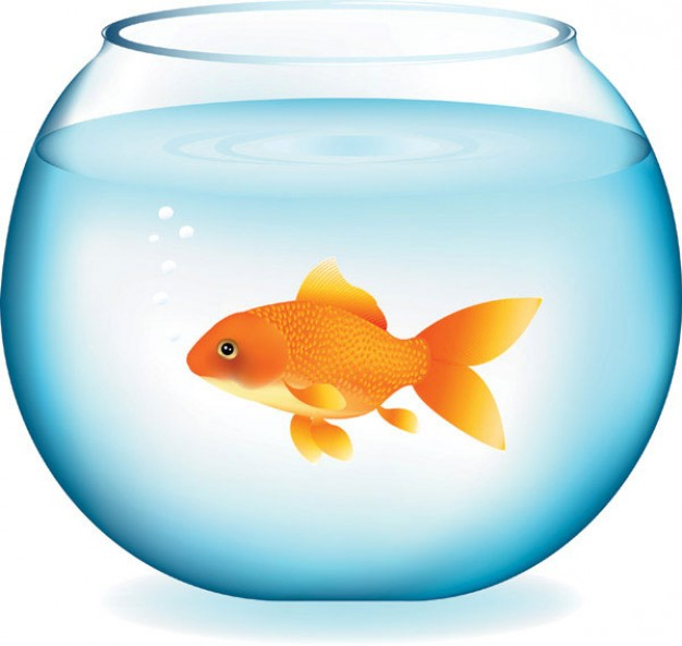 Goldfish swimming in fishbowl Vector material