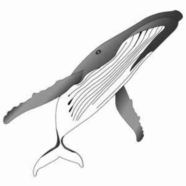 Humpback whale clipart - photo#6