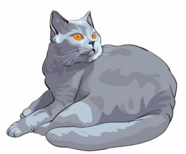 Grey Cat with orange eyes Illustration
