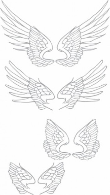 handmade wings set with White background