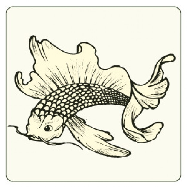 Japanese carp fish sketch with white background
